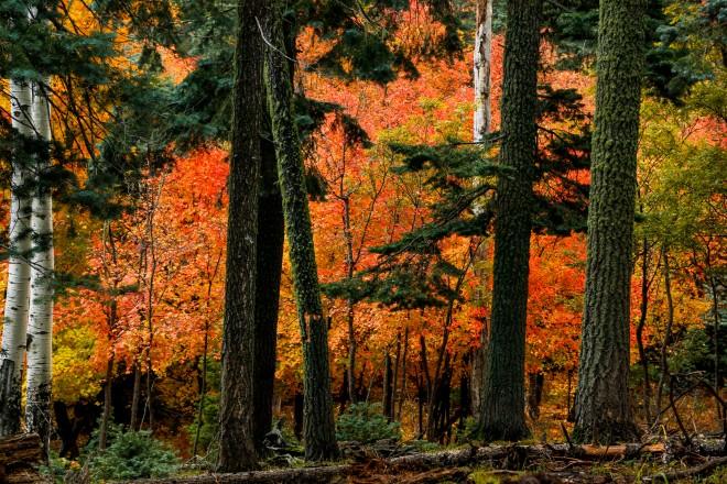 pinecolorback_PS