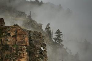 rim treecliff fog_Ss