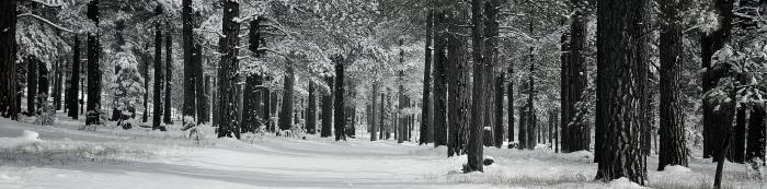 trees clos_PANOssi