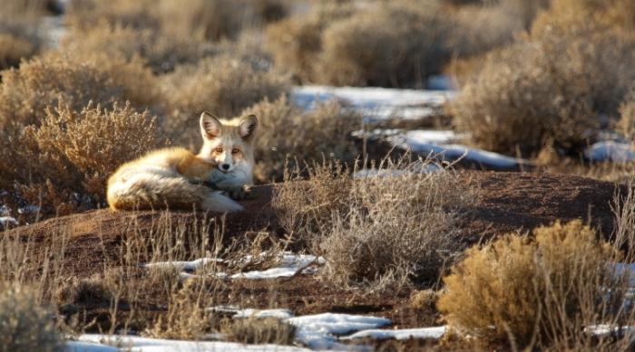 foxclosPSi
