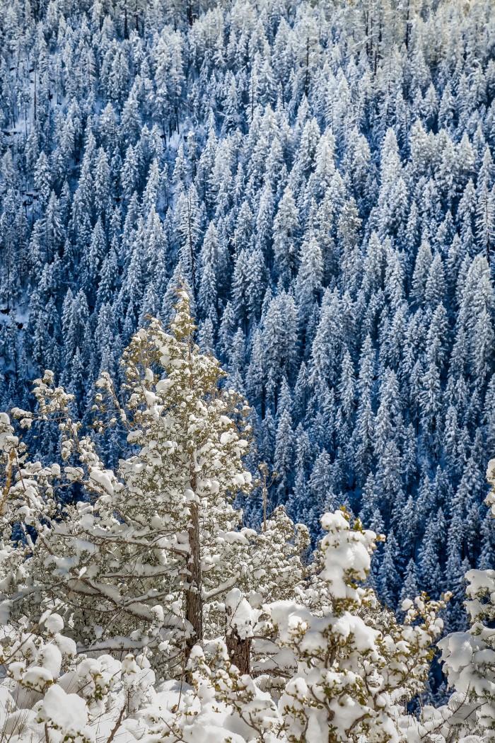 treesnovert_PS