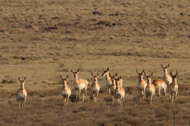 antelope-gathergPSi