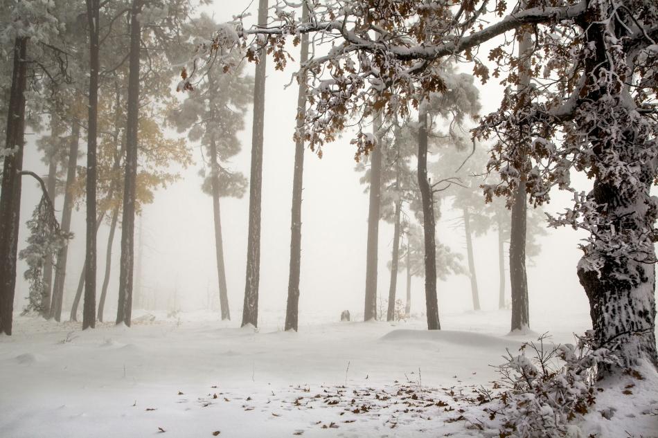 fog oakPSi