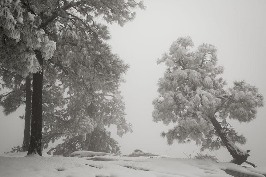 fog-treetiltPSi