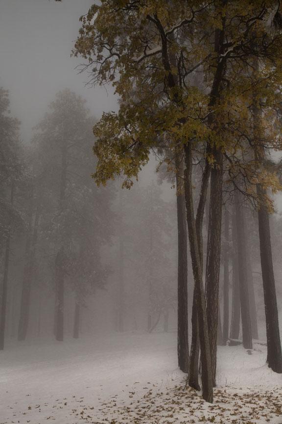 fog-yella1_PSi