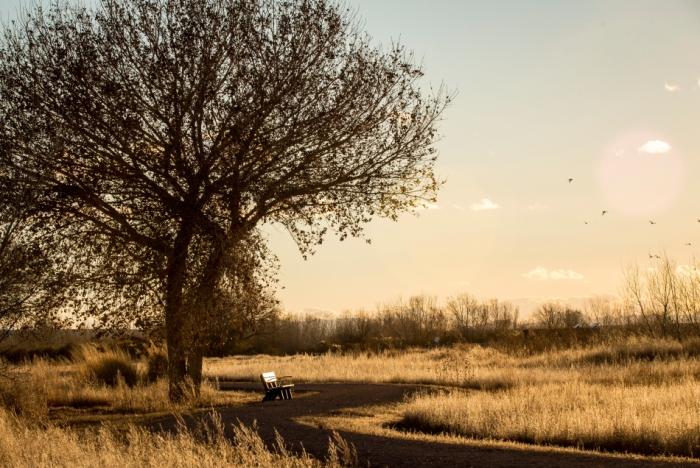 tree benchPSPSi.JPG