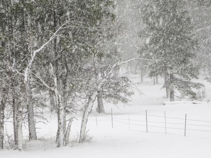 snowfencePSi.JPG