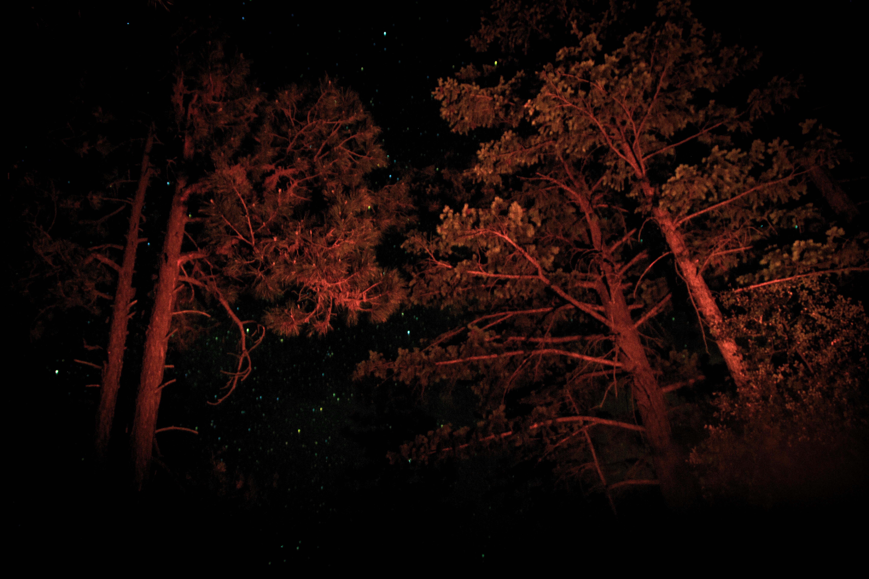 treenightPSi.JPG