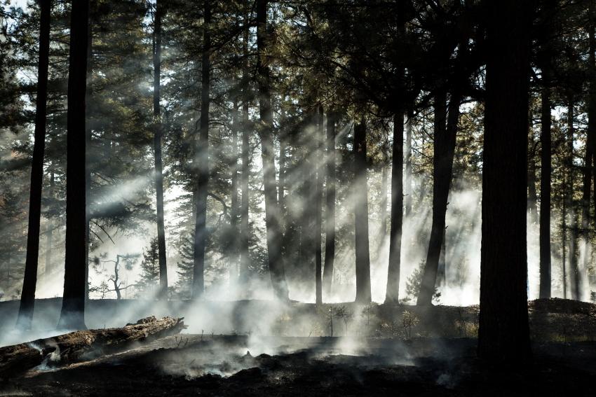 smoke rises2PSi.JPG
