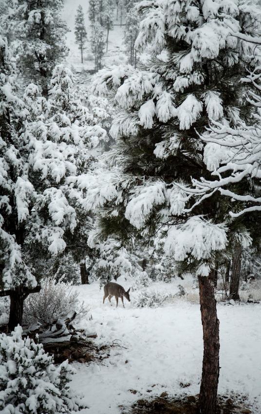 deer approachPSi.JPG