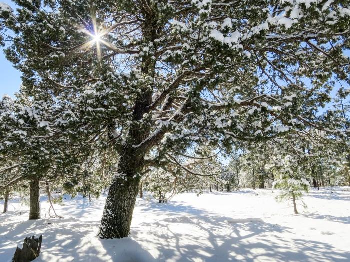 SnowBurst.jpg