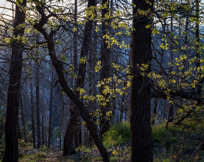treeslash._LR.jpg