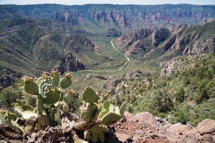 cacti road_IR.jpg