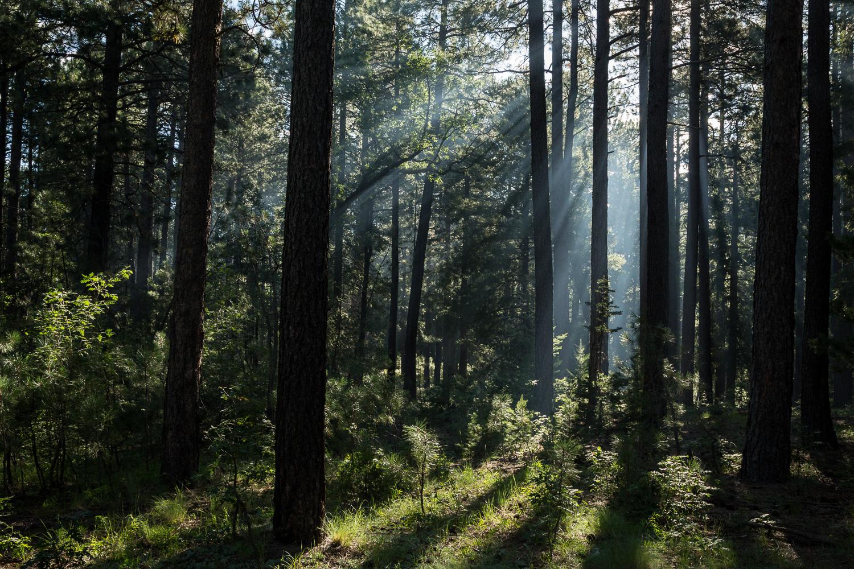 light beams hort_IR.jpg
