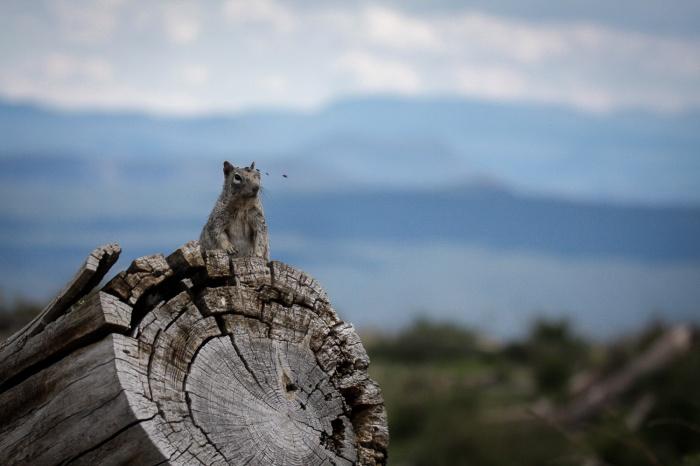 squirrel log_IR.jpg