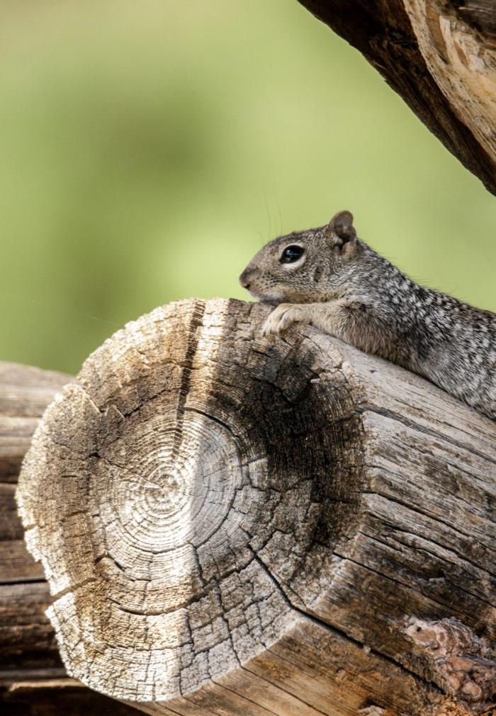 squirrel lounge_IR.jpg