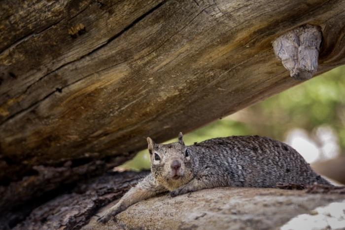 squirrel shade_IR.jpg
