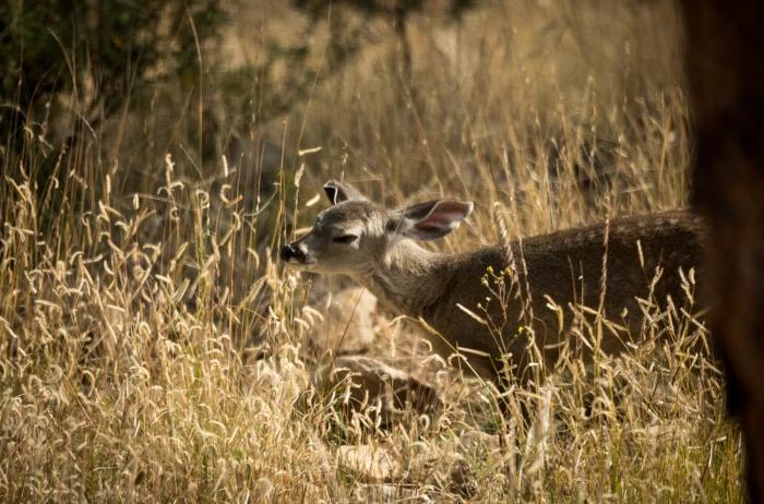 baby deer sniff_IR.jpg