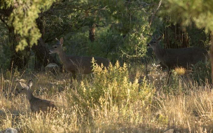 deer family_IR.jpg