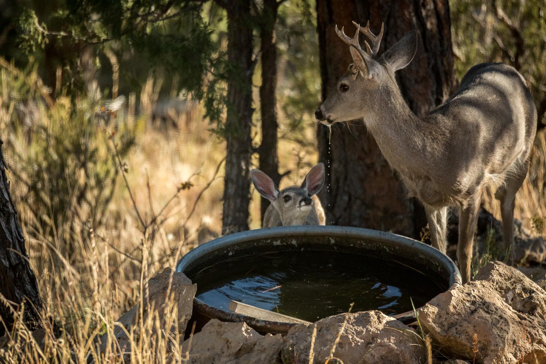 want water2_IR.jpg