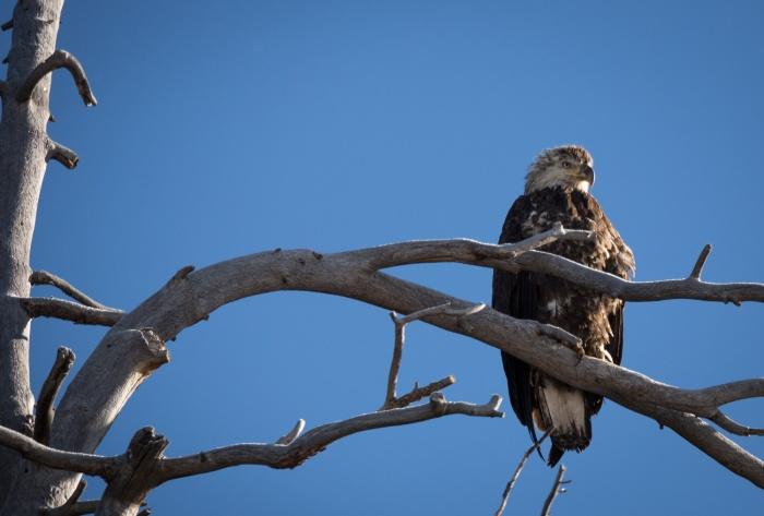 eagle mud_IR.jpg