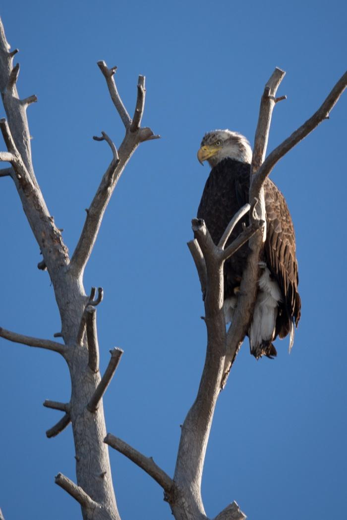 eagle shut_IR.jpg