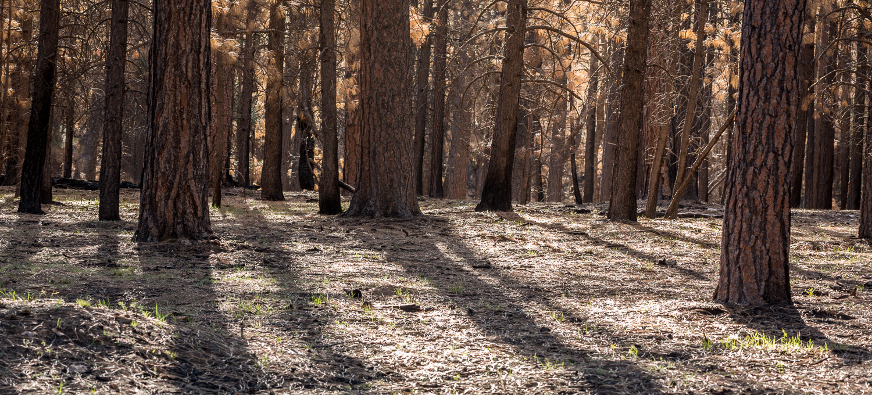 treeshadow_IR.jpg