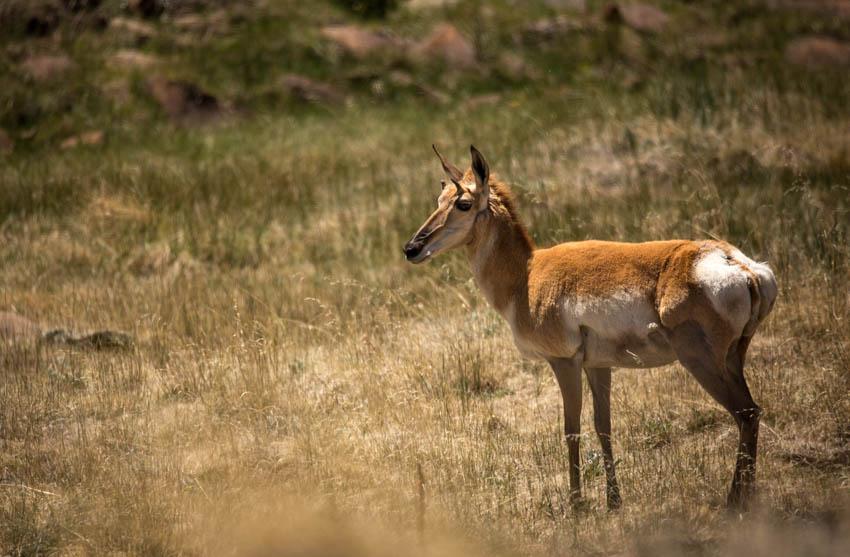 antelopestand_IR.jpg
