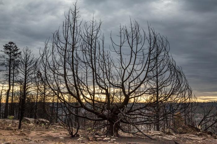 treeskeleton_IR.jpg