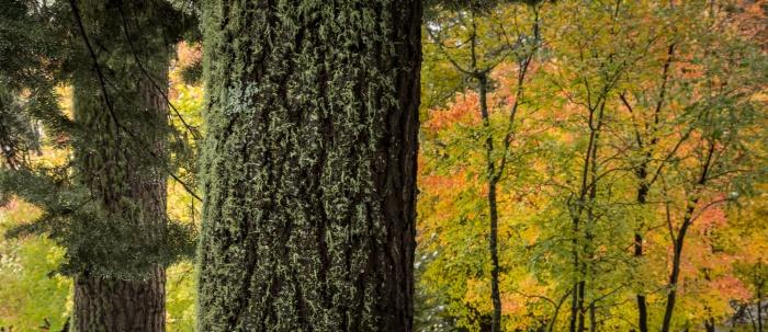 PineMoss Color_IR.jpg