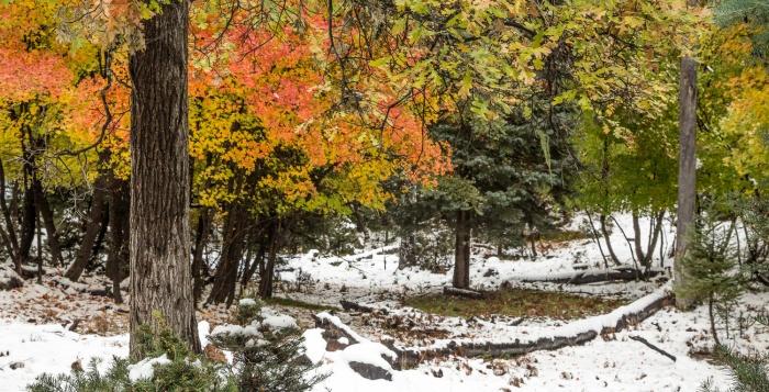 SnowFall_IR.jpg