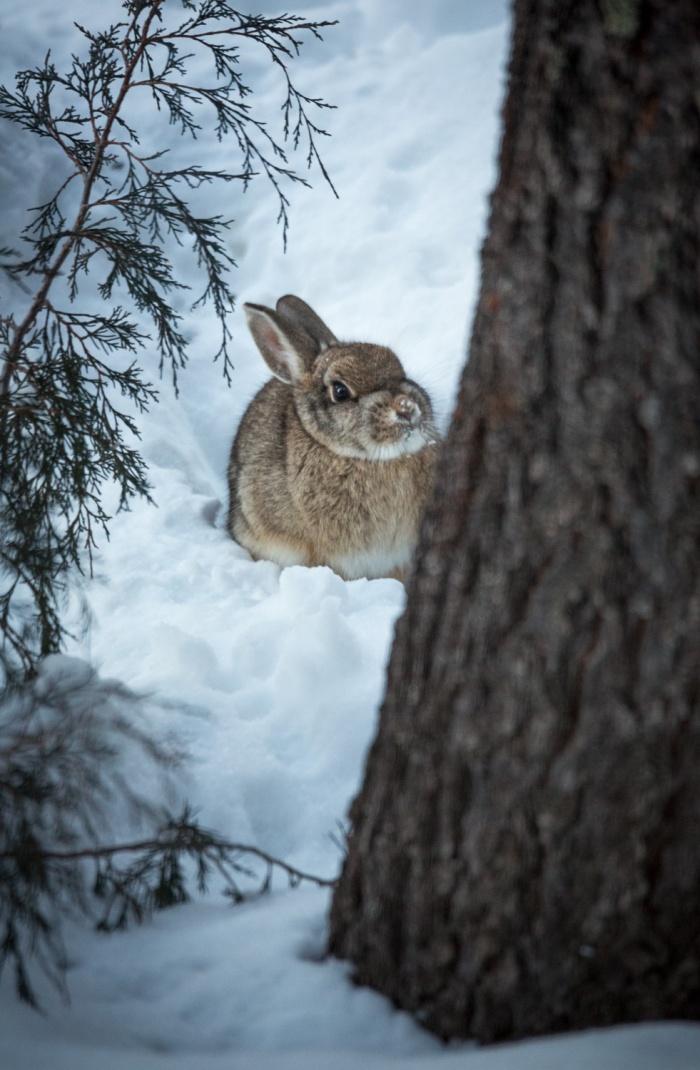 snowbunny_IR.jpg