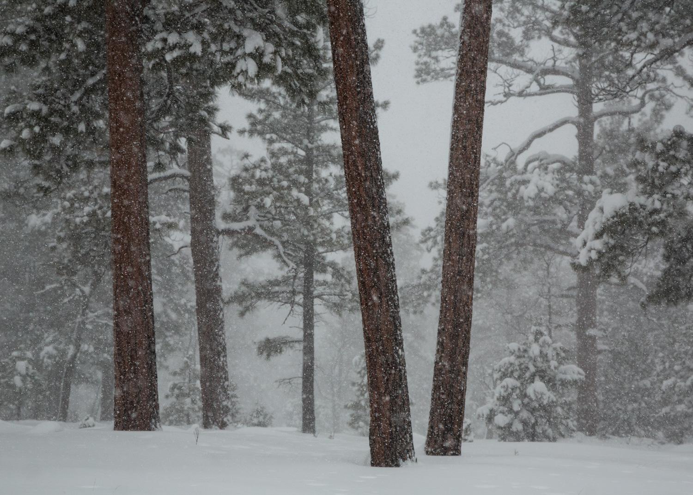 snowtrees_IR.jpg