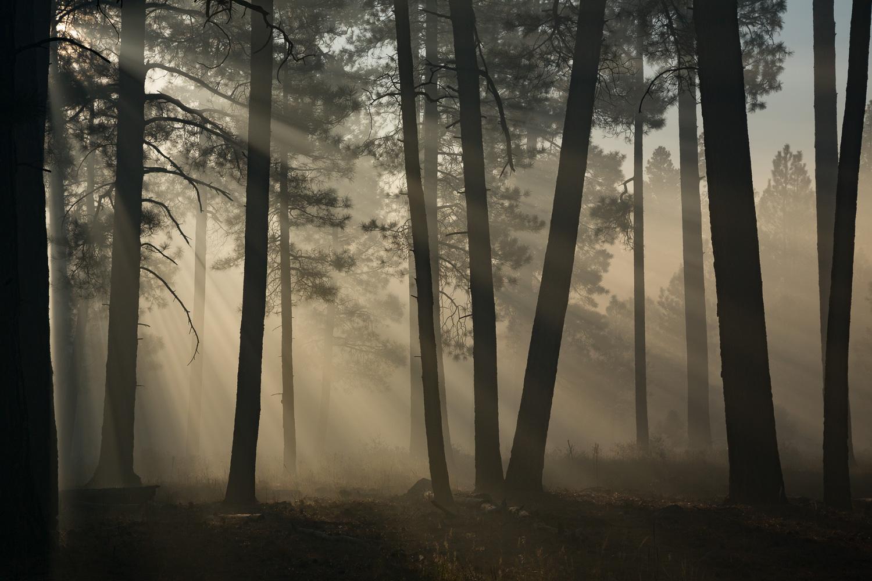 Tree Shadow_IR.jpg