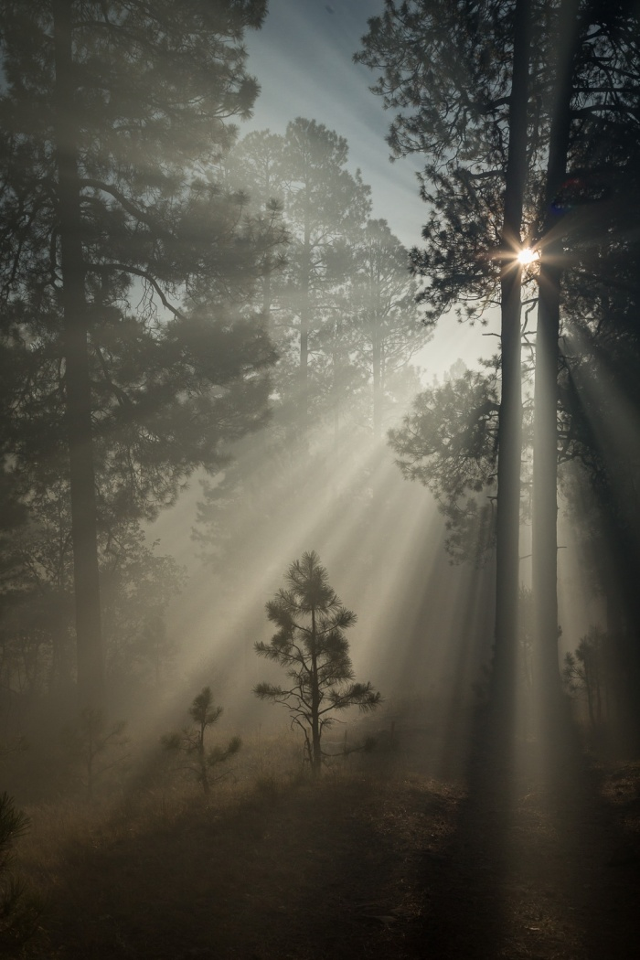 TreeBurst Vert_IR.jpg