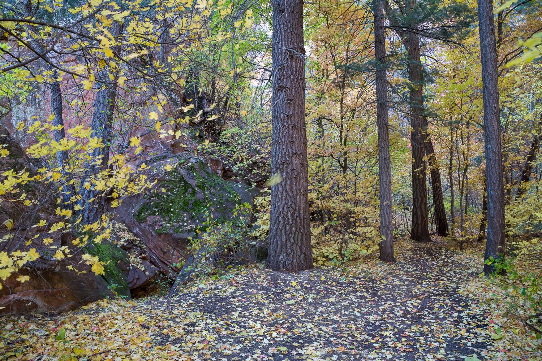 yellowfall trail_IR.jpg