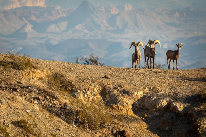 Big Horn Desert_IR.jpg
