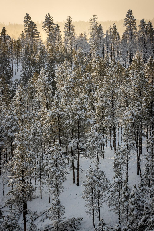 snowrise_IR.jpg
