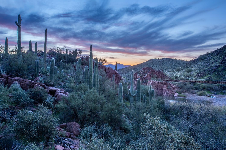 Cacti Overlook_IR.jpg